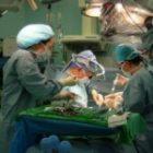 Peste 100 de transplanturi hepatice, realizate anual la Fundeni