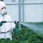 Erbicidul 2.4 D, inclus pe lista produselor care cresc riscul de cancer