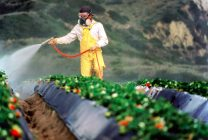 Războiul pesticidelor, la granița dintre profit și pierdere