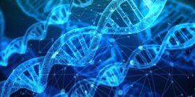 Organizația Mondială a Sănătății (OMS)  lansează un registru global de editare a genomului uman