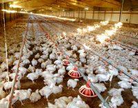 Centru de referință al UE pentru bunăstarea animalelor