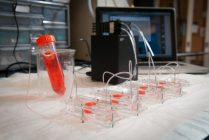 """""""Corpul pe un cip"""" folosește organe tipărite 3D pentru a testa vaccinuri"""