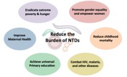 OMS întărește măsurile de eradicare a bolilor tropicale neglijate