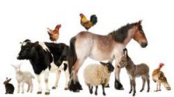 EMA vrea îmbunătățirea accesului la vaccinuri veterinare în Uniunea Europeană